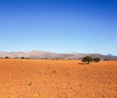 RPA #2 – Shy Five, czyli Nieśmiała Piątka Afryki i surykatki z Oudtshoorn